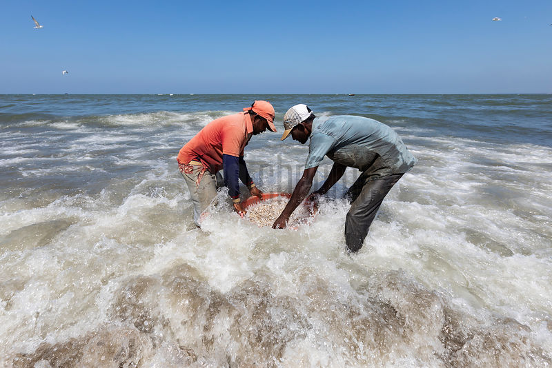 Fisherman Washing their Catch in the Ocean