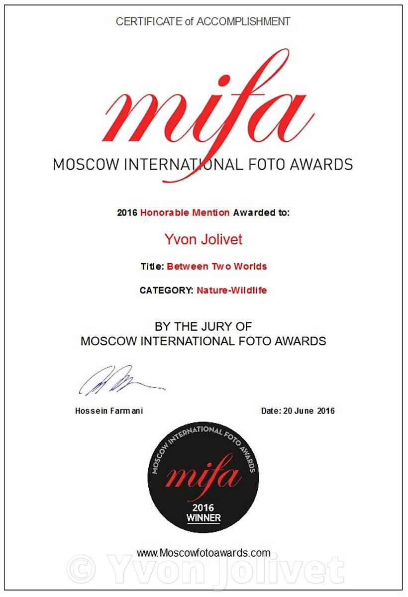 MIFA (Moscow International Foto Awards) 2016 Photographies, Distinctions