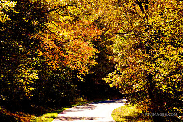 AUTUMN FOREST ROAD SHENANDOAH NATIONAL PARK VIRGINIA COLOR