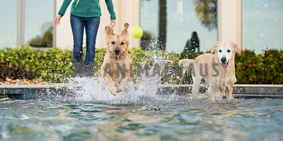 dog jumping into pool after tennis ball