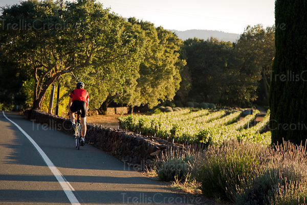 Athletic middle-age man rides his bike along Napa Valley vineyards