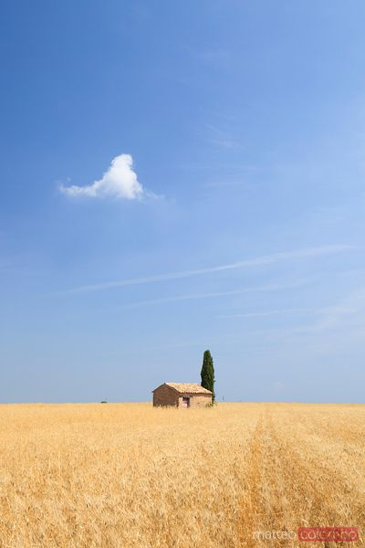 Barn in wheat field, Provence, France