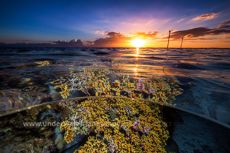 Sunset on reef