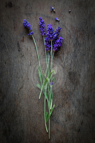 Lavender twigs on wooden background. Top view