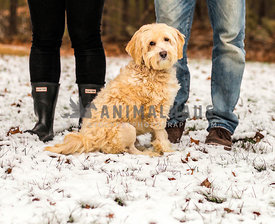 mixed breed dog sitting in snow with his humans