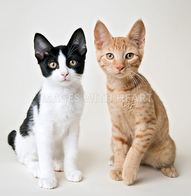 Two kittens sitting side by side