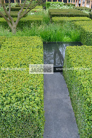 Haie basse : Buxus sempervirens (buis taillé), Paysagiste : Christopher Bradley-Hole, CFS, Angleterre