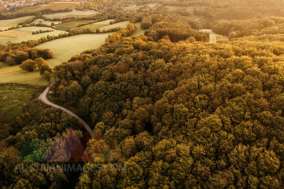 Austria, Lower Austria, Vienna Woods, Biosphere Reserve Vienna Woods, Aerial view of forest in the early morning