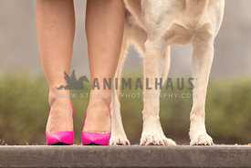 detail shot of woman's legs and yellow lab legs