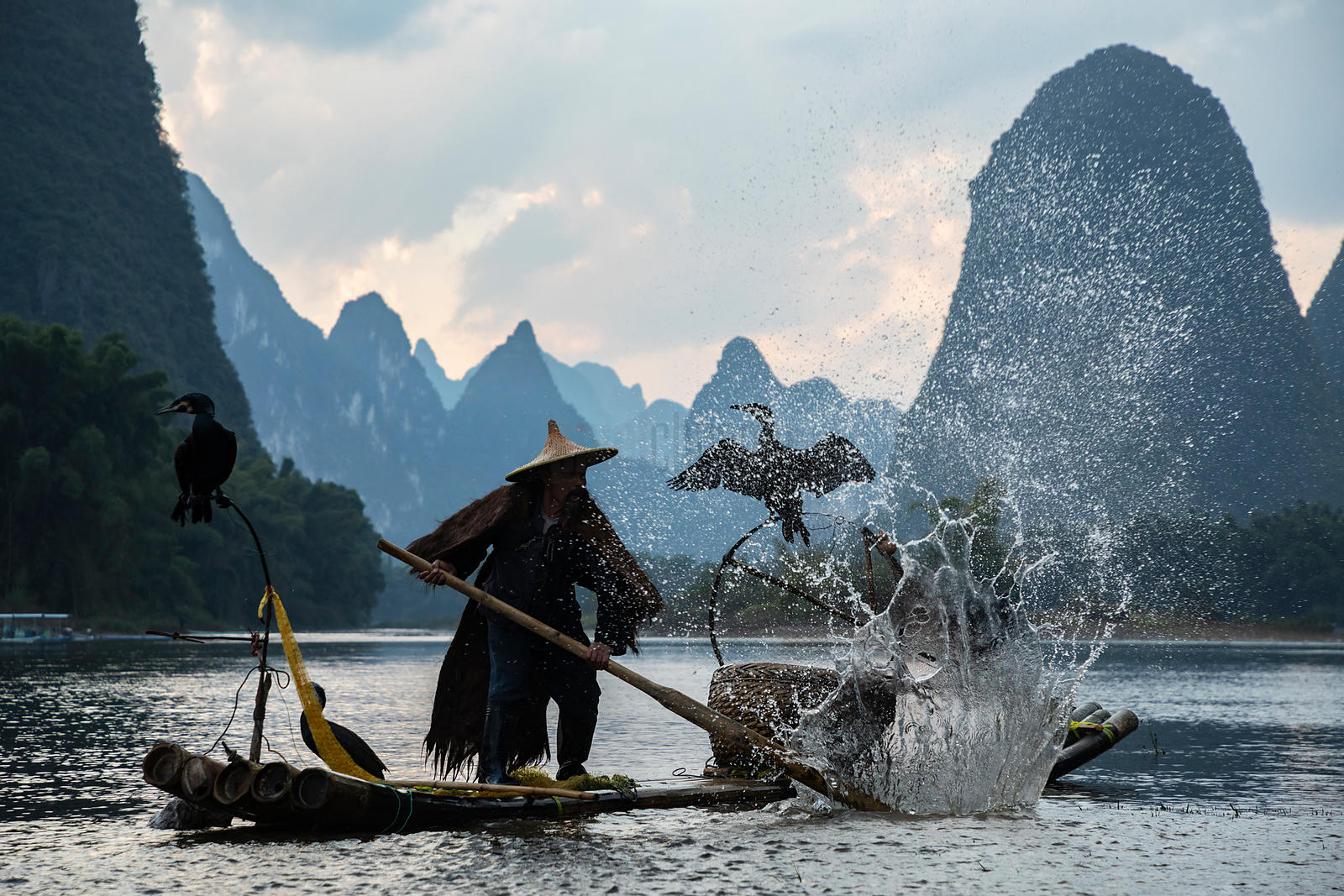 Cormorant Fisherman Beating the Water with a Paddle