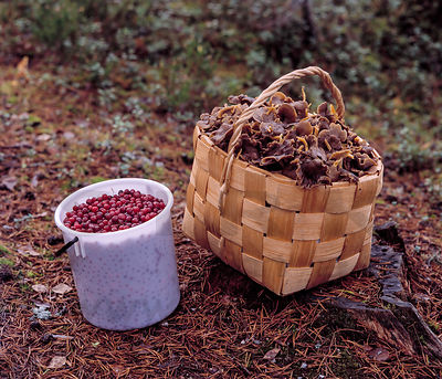 Superfood from the forest: cranberries & Trumpet Chanterelles