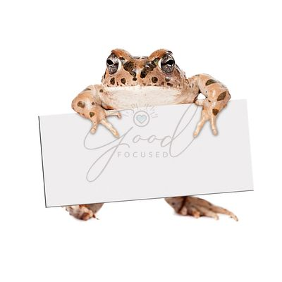 Sonoran Green Toad Holding Blank Sign