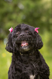 Happy young black dog in a park