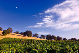 Vineyards and Moon #2
