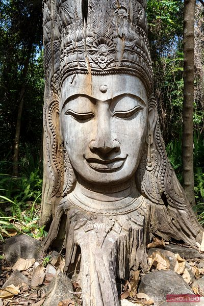 Buddha face carved in a tree, Thailand