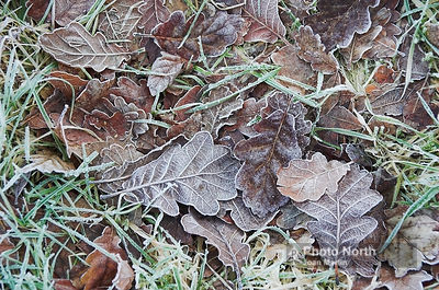 OAK 01A - Oak leaf litter