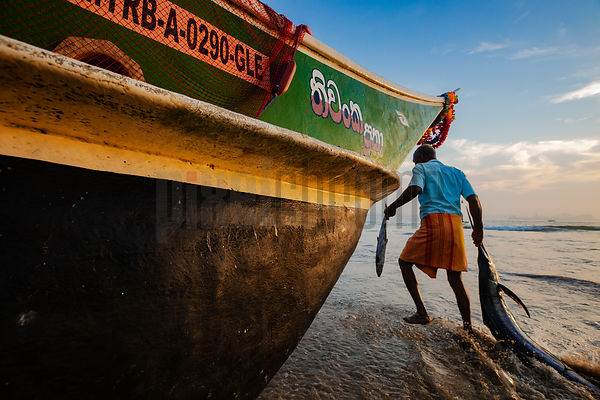 Bringing in the Catch at Galle Fishing Harbour