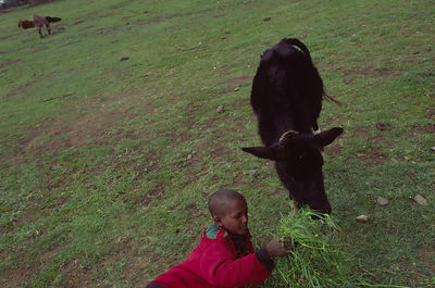A Ethiopian child feeds his calf