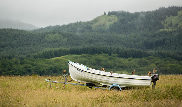 Have you ever seen pheasants in a boat?!