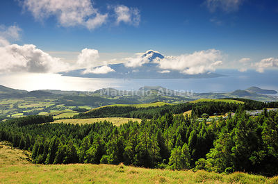 The cryptomeria's forests of Faial with the Volcano of Pico island on the horizon. Faial, Azores islands, Portugal