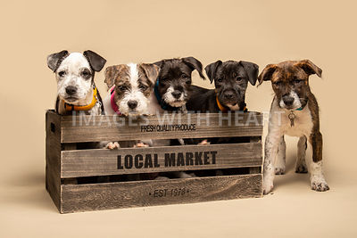 Five mixed breed puppies on beige