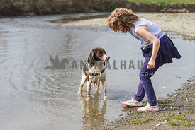 spaniel and girl playing in the water