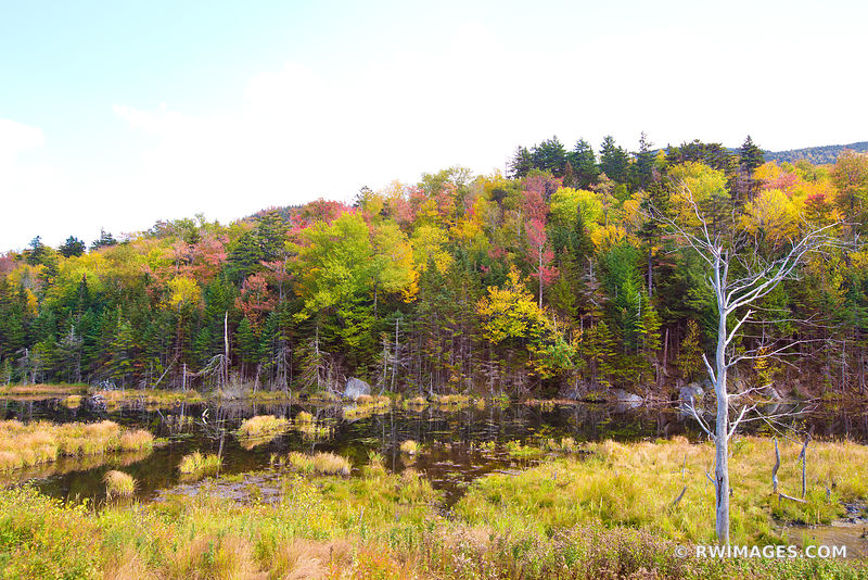 AUTUMN FOREST POND WHITE MOUNTAINS NEW HAMPSHIRE FALL COLORS FOLIAGE