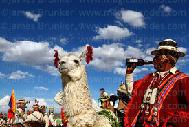 Aymara man drinking beer to celebrate his prize winning llama at rural festival, Orinoca, Bolivia
