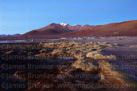 Hamlet on shore of Laguna Colorada and Cerro Negro before dawn, Eduardo Avaroa Andean Fauna National Reserve, Bolivia