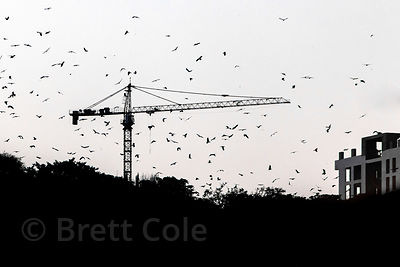 Silhouette of birds flocking around a construction crane in Mumbai, India.