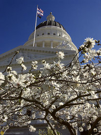 State Capitol and Flowers