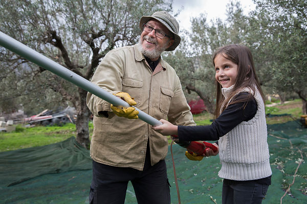 Alessandra, 7 ans, apprend à utiliser un peigne électrique avec Nikos pour la récolte des olives, Kritsa, Crète, Grèce / Alessandra, 7, learns to use an electric comb with Nikos for olive harvesting, Kritsa, Crete, Greece