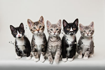 5 inquisitive kittens