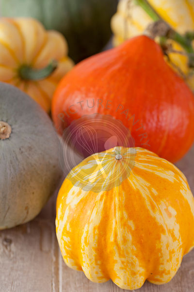 Pumpkins & Squashes