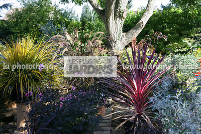 Massif, Feuillage décoratif, Libertia ixioides 'Goldfinger', Dahlia 'Candy Eyes', Pennisetum, Cordyline 'Pink Passion', Buddl...