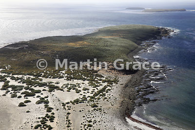 North-East Point of Sea Lion Island, Falkland Islands, from the air, showing large areas of Tussac (Poa flabellata)