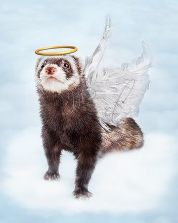 Pet Ferret Angel in Clouds