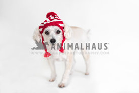 Cute dog wearing red striped winter hat against white background