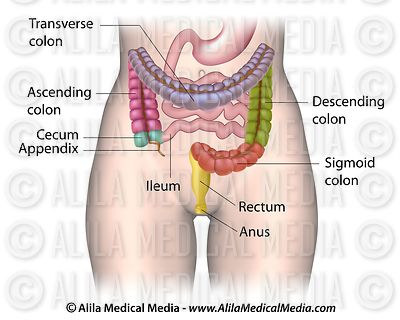 Colon anatomy.