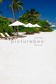 An image of palm trees, sun loungers and parasols on a tropical white sandy beach in the Maldives.