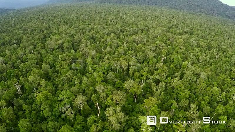 Aerial view of swamp forest, Suaq Balimbing, Kluet Swamps, Sumatra, Indonesia. 2015.