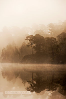 Misty dawn in Glen Affric - BP2986