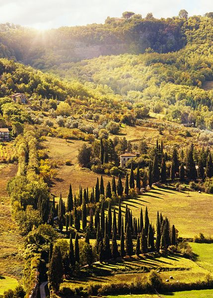 Countryside in Tuscany Italy With Cyprus Trees
