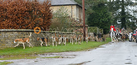 Belvoir hounds leaving the meet - The Belvoir Hunt at Buckminster