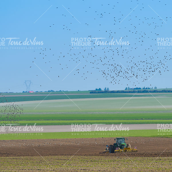 Tractor plowing the fields with a flock of birds above