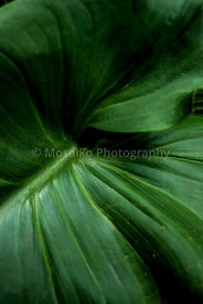 tropical_colors_23