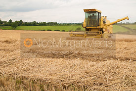 Combine harvester working in a field of corn