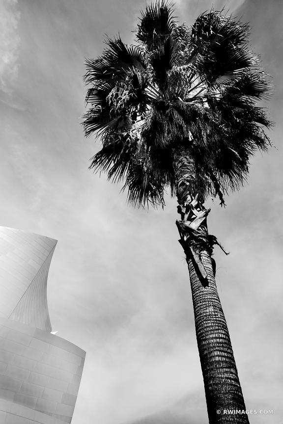 PALM TREE AND WALT DISNEY CONCERT HALL LOS ANGELES BLACK AND WHITE VERTICAL