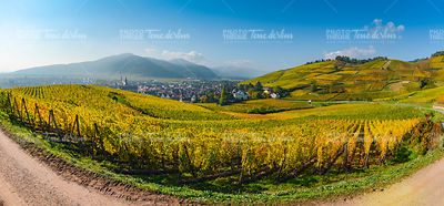 Wine Road, Vineyards of Alsace in France
