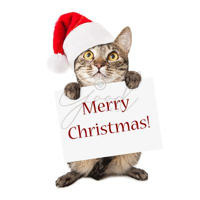 Cat Carrying Merry Christmas Sign